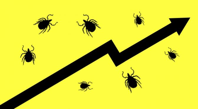 What's Trending? Ticks and Lyme Disease